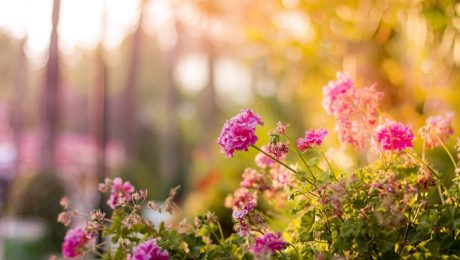 Quick Tips for Sprucing Up the Garden Setting